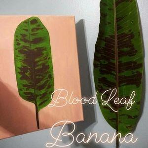 Blood Leaf Banana Painting